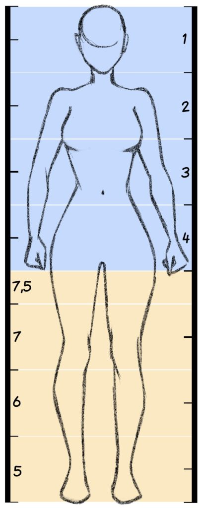 Anatomie-proportions-personnage