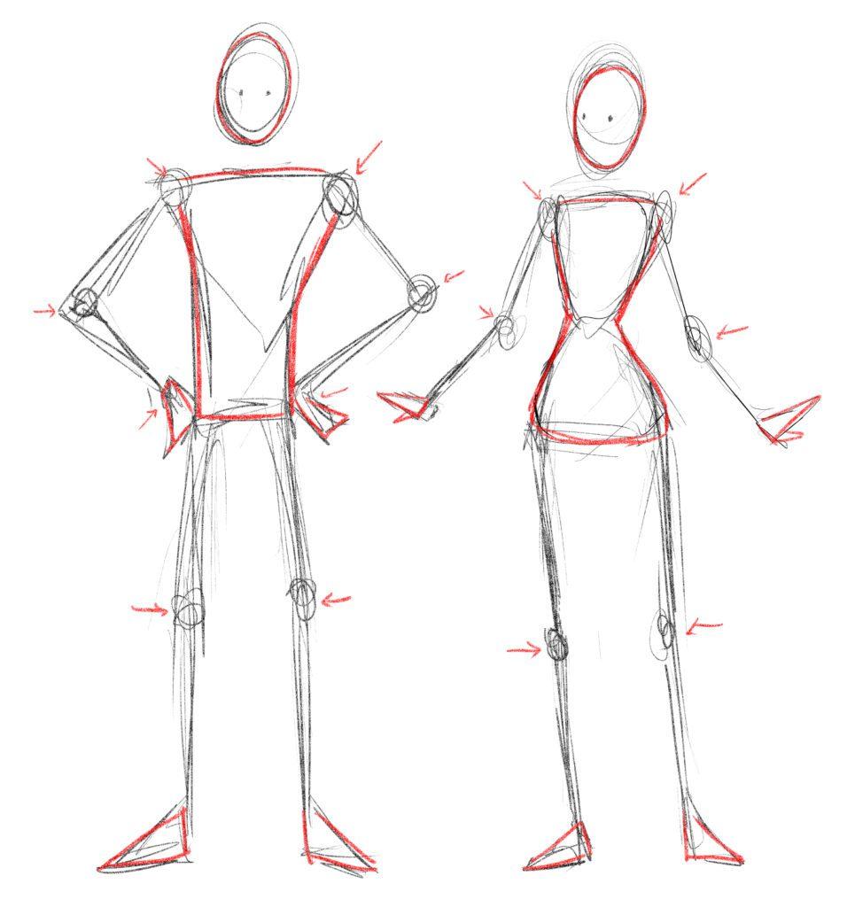 Squelette anatomie