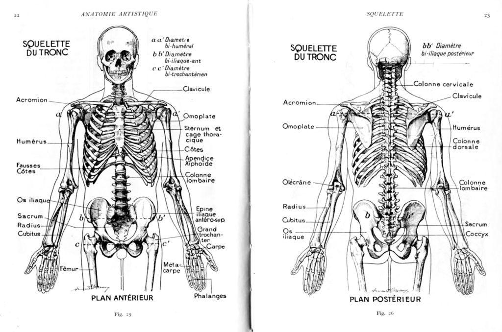 Dessiner des physiques différents : le squelette