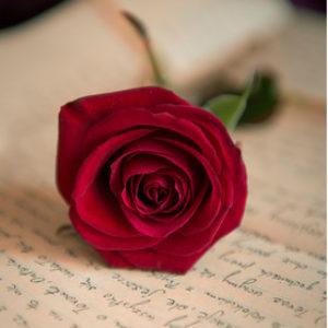 Photo de Profil de rosy